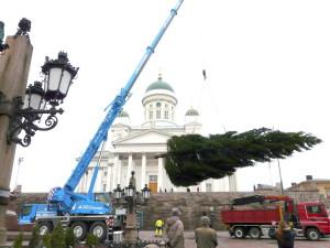 Joulukuuset nousivat jälleen Hakaniemeen ja Senaatintorille